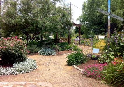 recommended plant varieties at the discovery garden - Dicovery Garden