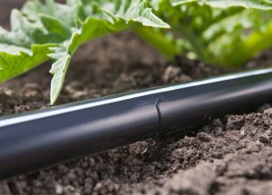 Effective Drip Irrigation