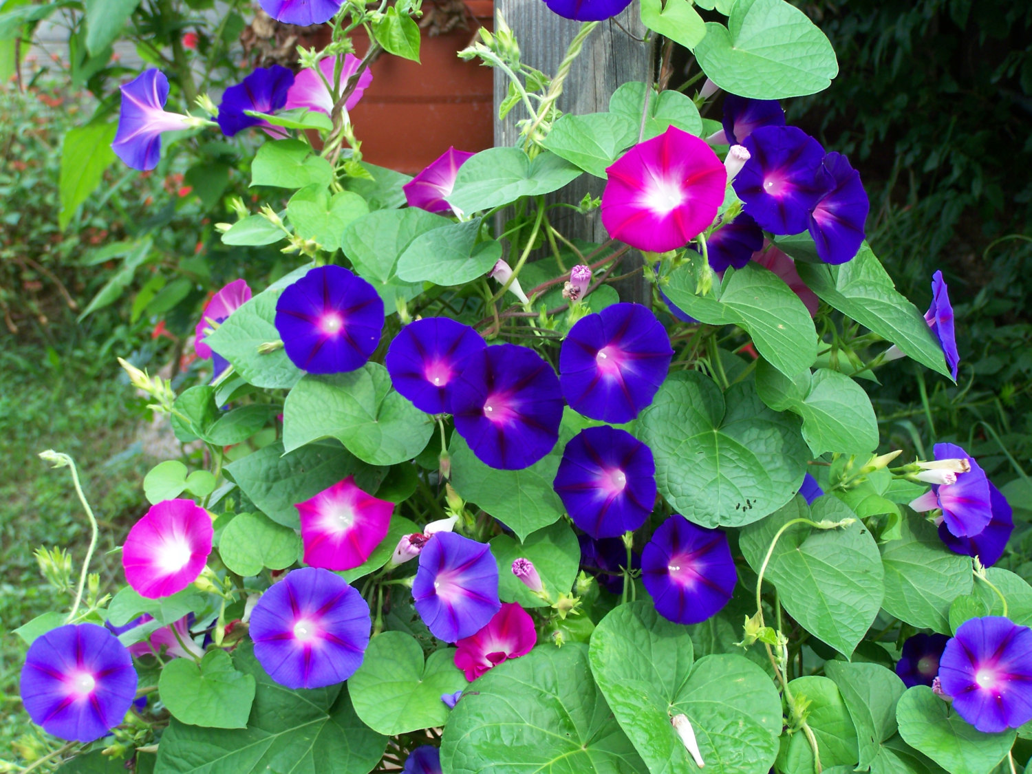 Sow What Annuals
