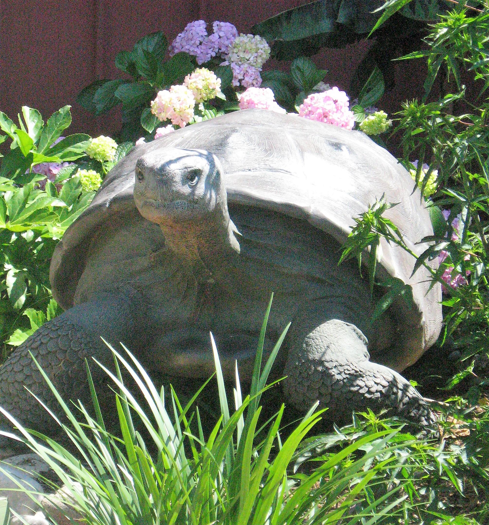 Turtleclose