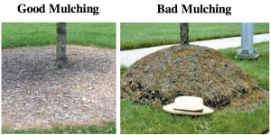 Good and bad mulch examples